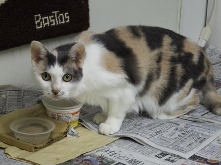 内田家の猫 ミー