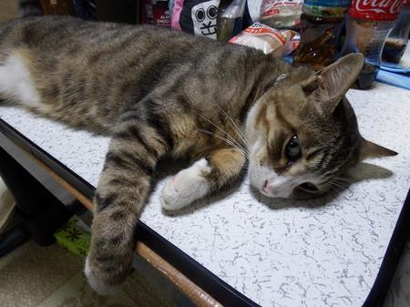 内田家の猫 虎男