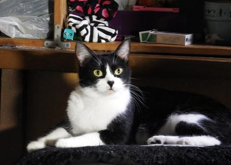 内田家の猫 ピー子
