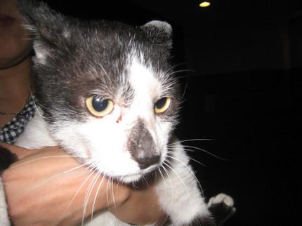 内田家の猫・キック