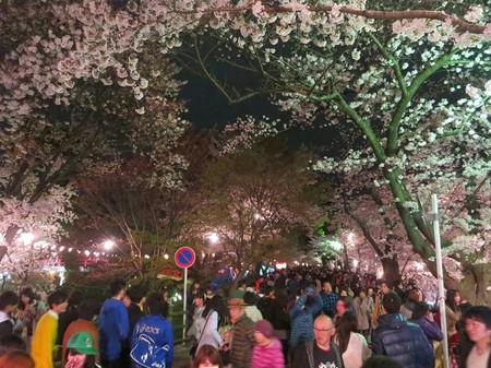 岡崎の桜まつり(2015年)