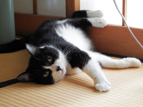 Cats2017summer2paintshop_2