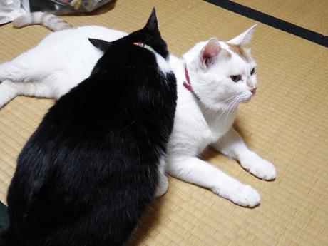 Cats2017summer3