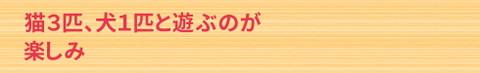 Shinyojohotitle8