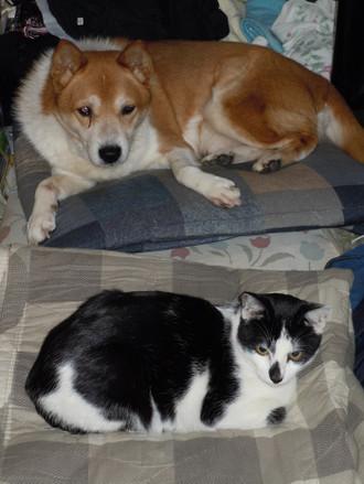 内田家の犬と猫 アル、キック