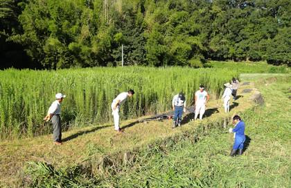 箱柳町の草刈り