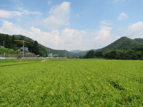 愛知県道37号沿い