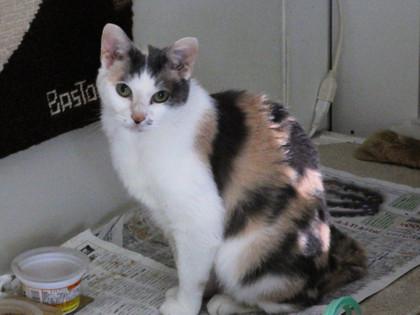 内田家の猫・ミー
