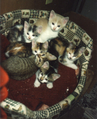 内田家で生まれた子猫たち