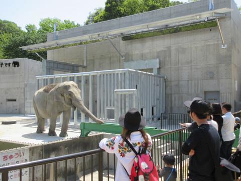 東公園動物園、ゾウのふじ子