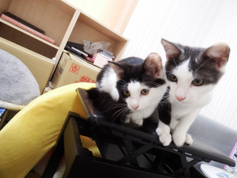 Cats201809246