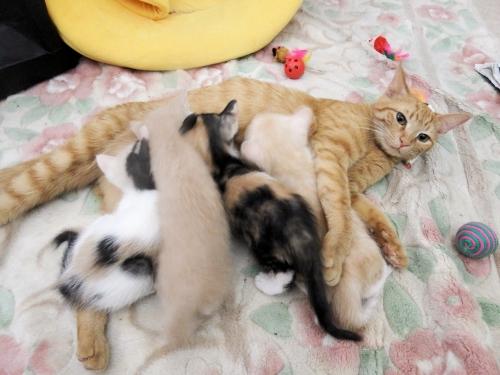 Cats2019042_20191130234001